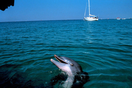 Tame dolphin- Panama City, Florida