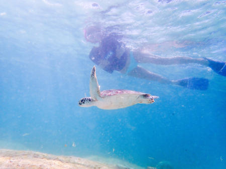 Snorkeling with a green turtle in Bonaire.