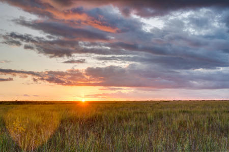 Sawgrass at sunset in the Everglades National Park.  This is called the river of grass