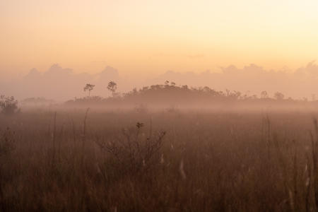 Sun rises on foggy sawgrass in Everglades National Park.  A cypress dome is in the background.