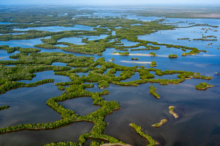 Flyover of the Everglades Park Area.   Mangrove islands in the Ten Thousand Islands area near Chokoloskee.
